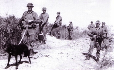 Milo & Pte Ron Johnson handler, with 2RAR tracker dog patrol 1970